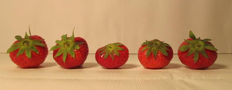 Erdbeeren zum Einfrieren auswaehlen