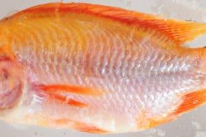 Fisch auftauen