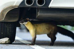 gomago marderschutz auto marder schaden